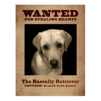 Rascally Retriever, aka Yellow Lab Postcard