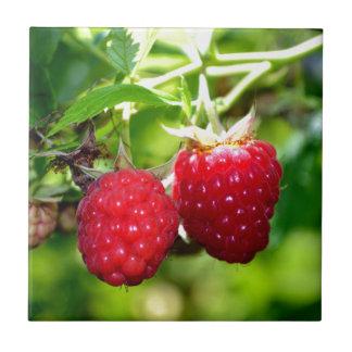 Raspberries Tile
