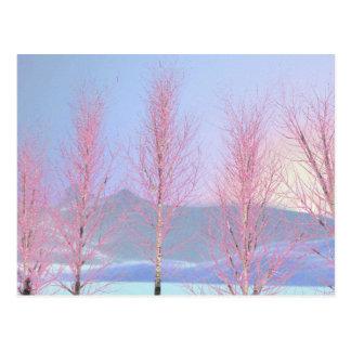Raspberry Creme Birch Postcard