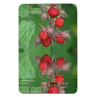 Raspberry Reflections Magnet