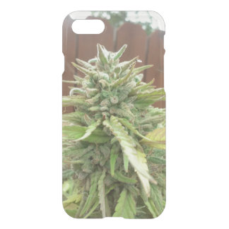 Rasta iPhone 8/7 Case