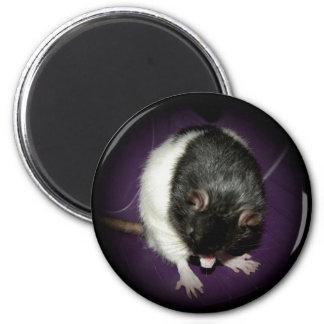 Rat cutie magnet