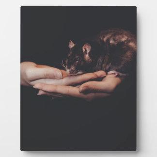 Rat in hand... plaque
