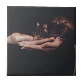 Rat in hand... tile