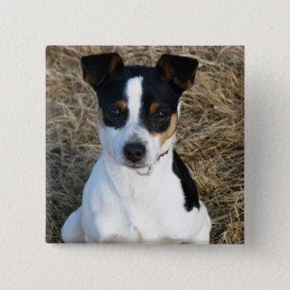 Rat Terrier 2 Inch Square Button