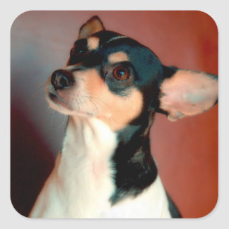 Rat Terrier Color Square Sticker