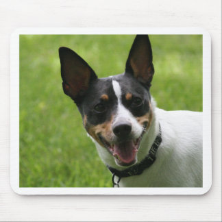 rat terrier mouse pad