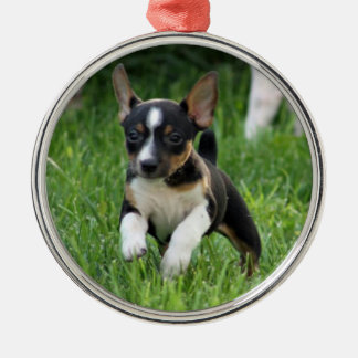 Rat terrier Ornament