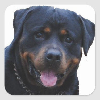 Rath Rottweiler Square Sticker