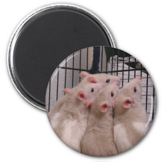 Rats 2 Inch Round Magnet