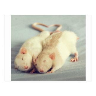 Rats heart tail postcard