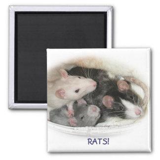 RATS! MAGNET
