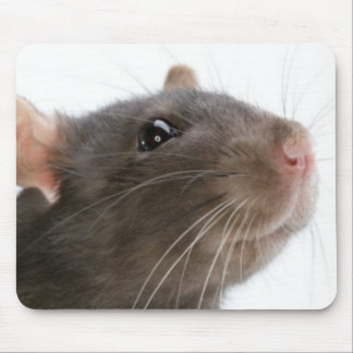 Rats!!! Mouse Pad