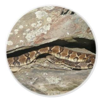 Rattlesnake at Shenandoah National Park Ceramic Knob