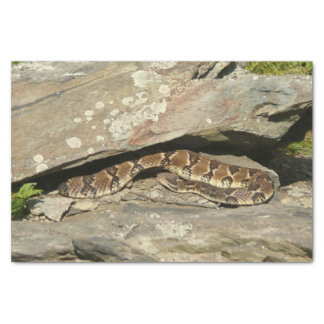 Rattlesnake at Shenandoah National Park Tissue Paper