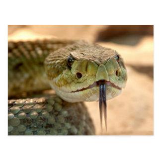 Rattlesnake Closeup Photo Postcard