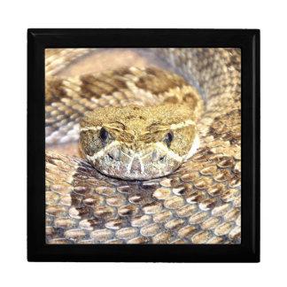 Rattlesnake face gift box