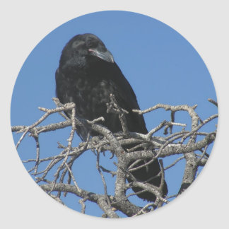 Raven Classic Round Sticker