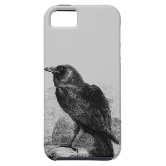 Raven Corvus iPhone 5 Cover