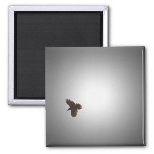 Raven in Flight Magnet