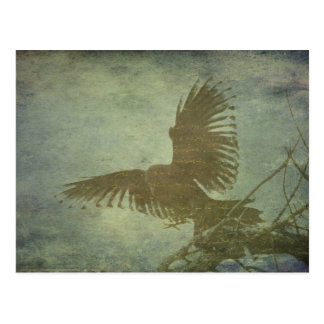 Raven of Poe's Poetry Postcard