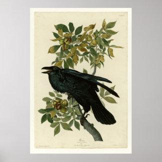 Raven Poster