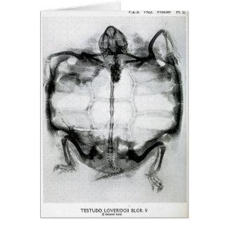 Rayon X vintage de tortue Carte De Vœux