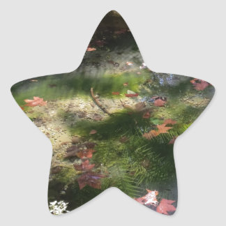 rays and leaves on water star sticker
