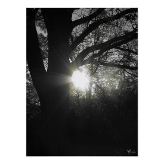 Rays - B&W Tree Photography Poster / Print