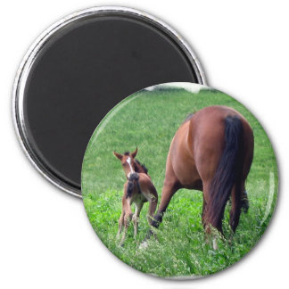 Reaching Foal with Mare Refrigerator Magnet
