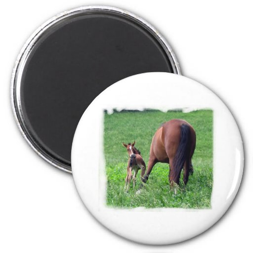 Reaching Foal with Mare Magnet