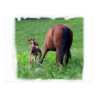 Reaching Foal with Mare Postcard