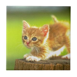 Ready To Pounce Kitten Tile
