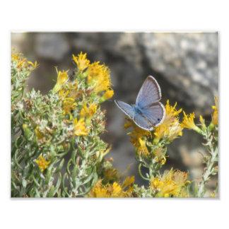 Reakirt's Blue Butterfly Photo Print