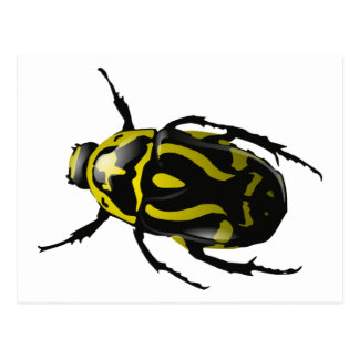 Realistic Hornless Yellow and Black Beetle Insect Postcard