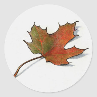 Realistic Maple Leaf: Color Pencil Art Round Sticker