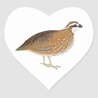 Realistic Quail Bird Heart Sticker