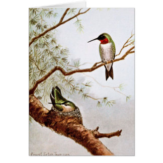 Realistic Ruby-Throated Hummingbird Art Card