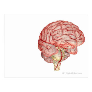 Realitic rendering of the human brain postcard