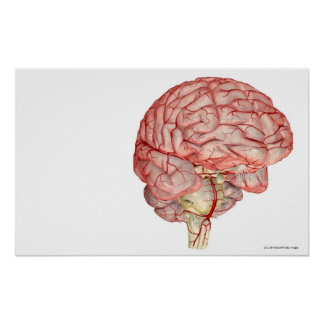 Realitic rendering of the human brain poster