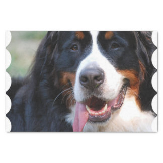 Really Cute Bernese Mountain Dog Tissue Paper