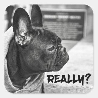 Really? Dog Square Sticker
