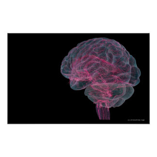 Rear view of the human brain poster