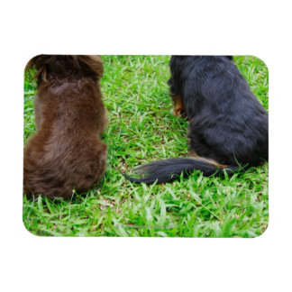 Rear view of two Dachshund dogs Magnet