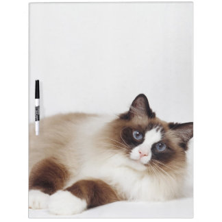 Reclining Cat Dry Erase Board
