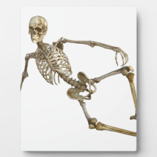 Reclining Skeleton Plaque