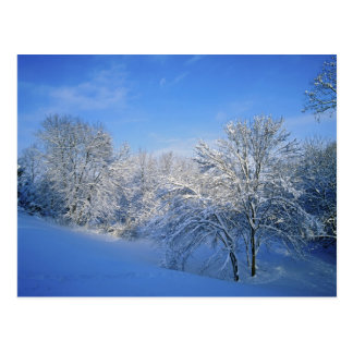 Record snow in Louisville, Kentucky. Post Cards
