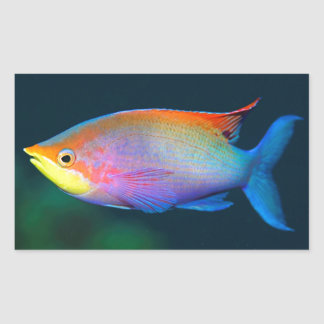 RECTANGLE TROPICAL RAINBOW FISH STICKER