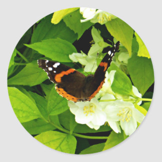 Red Admiral Butterfly Classic Round Sticker