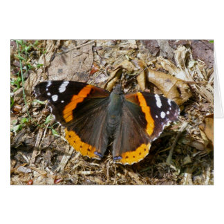 Red Admiral Butterfly Note Card